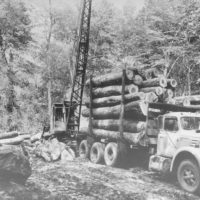 Photograph of National Forest Timber Sale