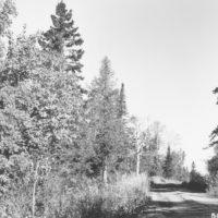 Photograph of Fall Color Along Cramer Road