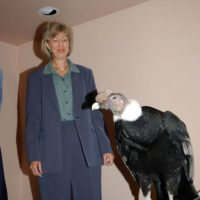 Secretary Gale Norton inspecting bird from Oregon Zoo in Portland, during participation in Zoo-hosted event highlighting agreement for protecting four at-risk wildlife species in Oregon. Agreement involves U.S. Fish and Wildlife Service, Oregon Department of Fish and Wildlife, Threemile Canyon Farms, Nature Conservancy, Portland General Electric