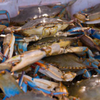 Office of the Administrator (Lisa P. Jackson) - Lafourche, Louisiana (BP Oil Spill) - Christopher Fonseca,  Lafourche, LA,  returns with a meager catch of crab. He worries about being shut down,  especially since it has been a poor year so far. USEPA photo by Eric Vance [412-APD-669-2010-05-14_LafourcheLA_017_1.jpg]
