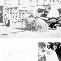 US Atomic Energy photographs in Life Magazine Exhibit. Test goat. Photograph of image taken July 15, 1948